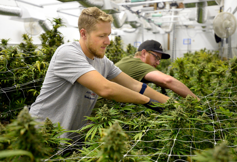 Cannabis Industry Offers Marijuana Jobs for Veterans