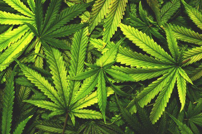 """Marijuana Advocates Hold a """"Religious Ceremony"""" for the Sacred Herb"""