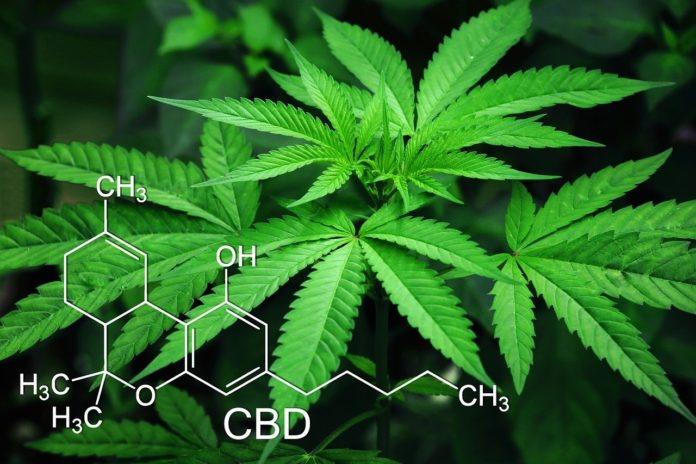 How CBD is Extracted from Marijuana LeafedOut