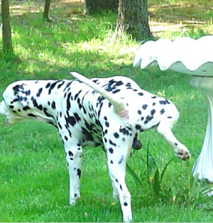 Puddles's Profile Photo