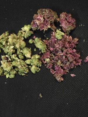 Weedmastrr's Profile Photo