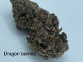 Dragon berries